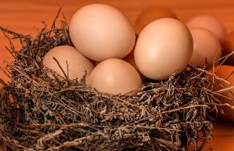 ไข่ไก่ กี่แคล กินอย่างไรให้ได้ประโยชน์ต่อสุขภาพมากที่สุด