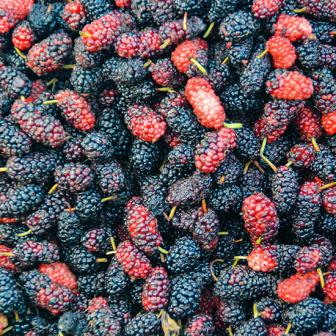 มัลเบอร์รี กี่แคล กินอย่างไรให้ได้ประโยชน์ต่อสุขภาพมากที่สุด